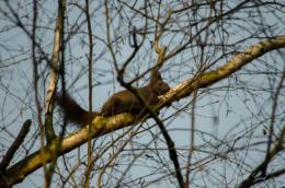 eichhörnchen-auf-dem-johannesfriedhof