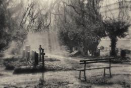 johannesfriedhof-meißen-cölln-bank