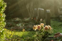 johannesfriedhof-meißen-cölln-rosen