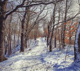 winter-im-wald
