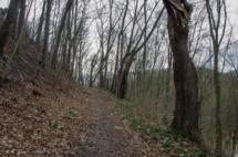 Dweg zum schloss scharfenberg
