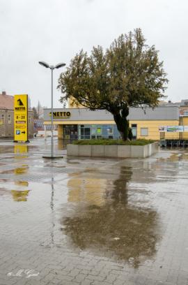 parkplatz-hunde-netto-baum