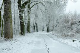 winterlandschaft-sächsische-schweiz-3