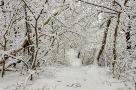 Man sieht den Wald vor lauter Schnee nicht mehr