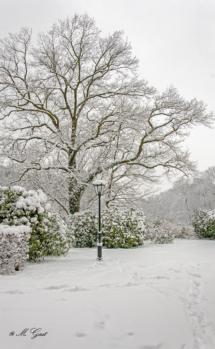 Winter im Schlosspark Proschwitz