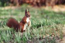 eichhörnchen-großer-garten-dresden-2