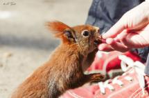 eichhörnchen-großer-garten-dresden-3