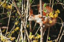 eichhörnchen-großer-garten-dresden-4