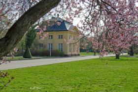 frühlingsblühte-großer-garten-dresden