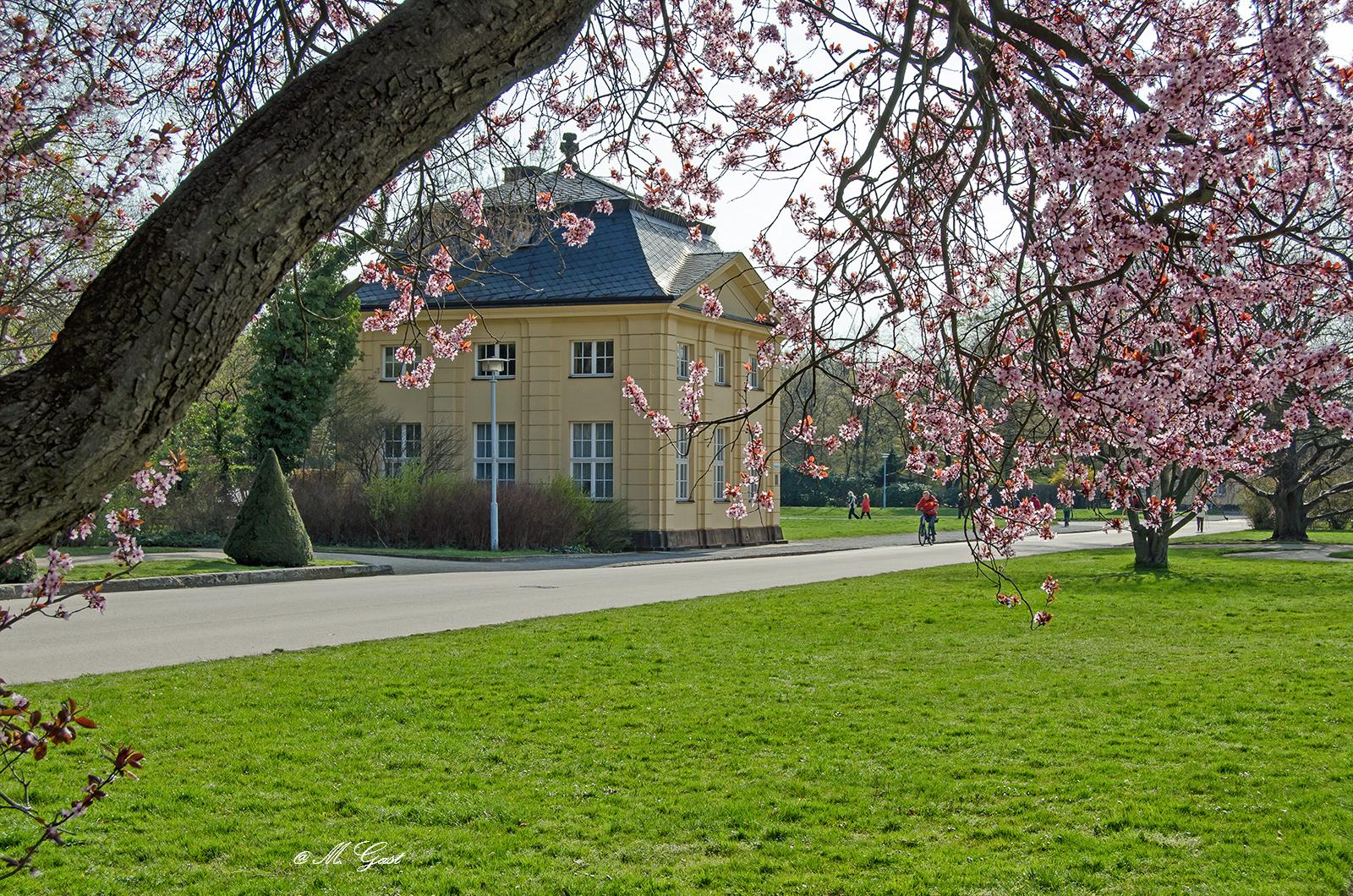 Frühlingserwachen Im Großen Garten Dresden Mystik Moments