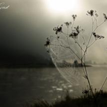 nebellicht-spinnennetz