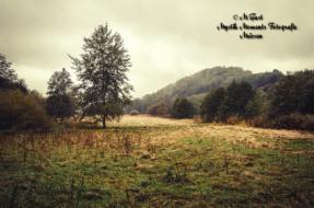 landschaft-an-der-freiberger-mulde-3