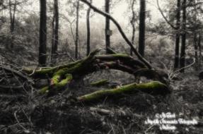 totholz-mulde