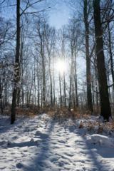 moritzburger-winterlandschaft