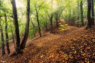 Nebelwald nahe des Götterfelsens