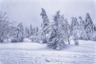 cínovec schnee eiswald