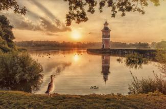 leuchtturm moritzburg graugans