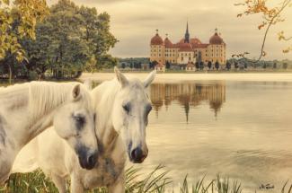 moritzburg pferde leinwand